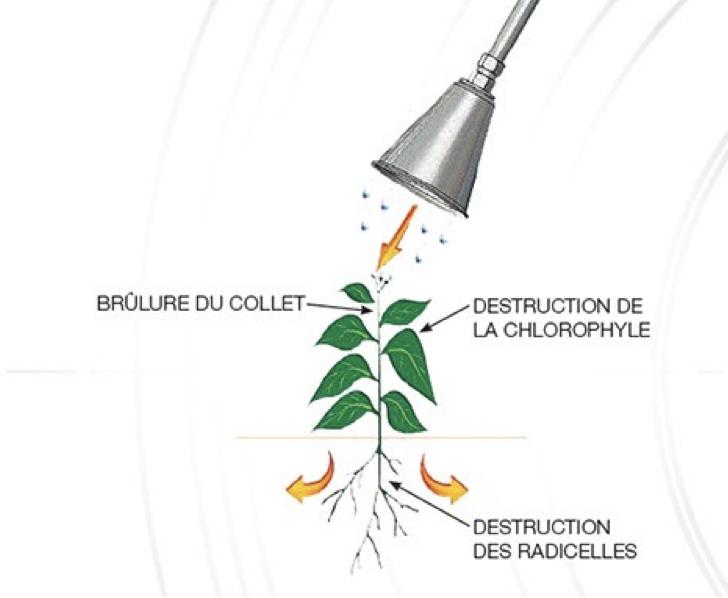 Désherbage sans pesticides tahiti